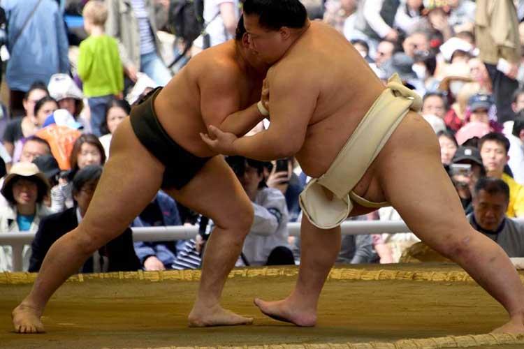 Sumo-live